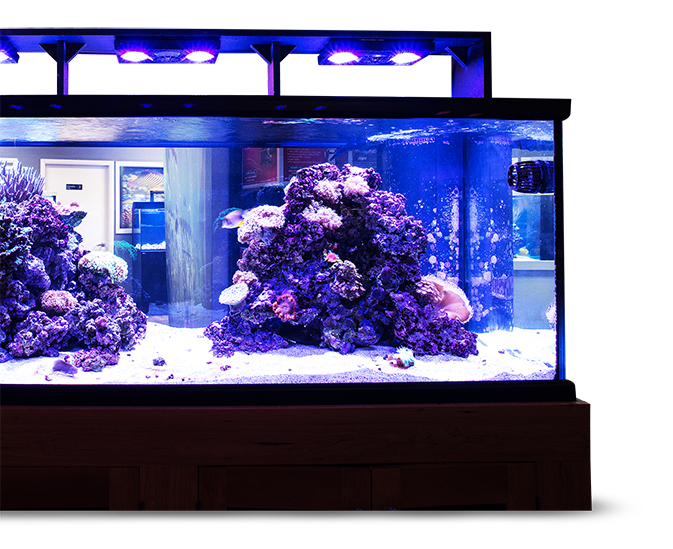 Aquatica – Your Aquarium – Our Passion